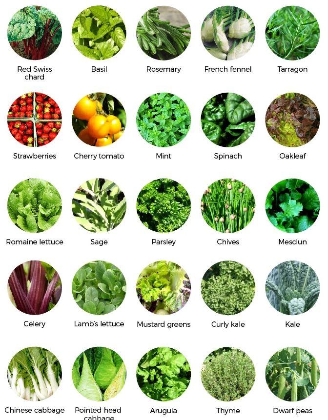 Les légumes que vous pourrez faire pousser avec votre oGarden